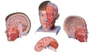 Головокружение при шейном остеохондрозе: причины, симптомы, лечение