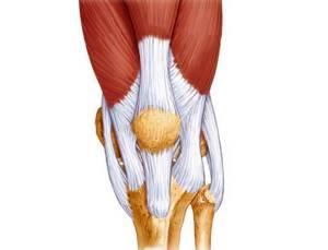 Разрыв связок коленного сустава: лечение, симптомы, причины травмы