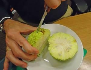 Маклюра в виде настойки для лечения суставов