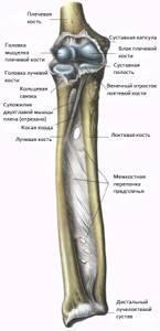 Локтевой сустав