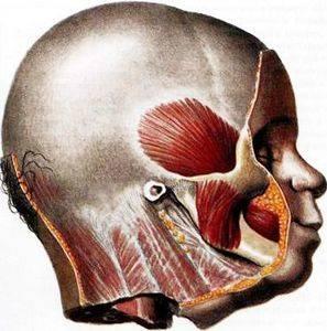 Симптомы и лечение височного тендинита : лекарства, физиотерапия и хирургия