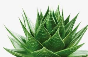 Травы в лечении артрита ревматоидной формы: помогают или нет