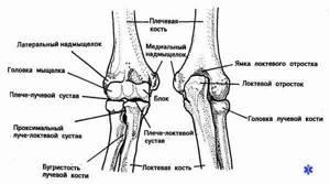 Вывих локтевого сустава: восстановление, помощь и последствия