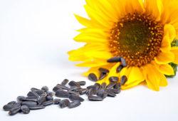 Питание при остеохондрозе: правильная диета, полезные и вредные продукты