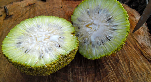 Адамово яблоко: рецепт настойки для суставов, рецепт мази