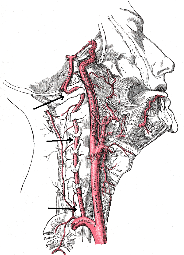 Симптомы шейного остеохондроза: все основные признаки болезни