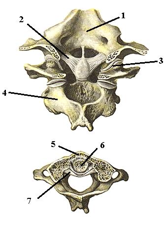 Атлантозатылочный сустав