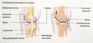 Хруст в коленях при приседании: причины хруста у взрослых и детей